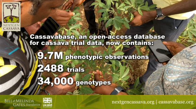 As of the end of Phase 1, Cassavabase hosts a great amount of data related to cassava trials.